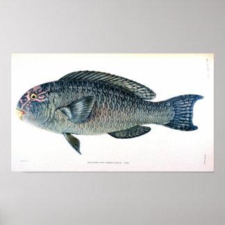 De historische Studie van Vissen Poster