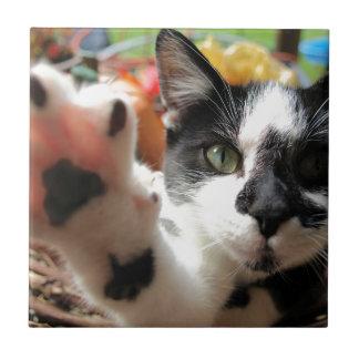 """De """"hoge"""" tegel van de Kat van Kat Vijf kleine Tegeltje"""