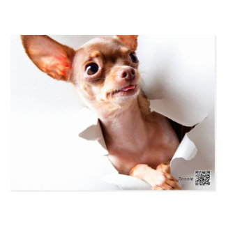 De hond die van Chihuahua door scheuren Briefkaart