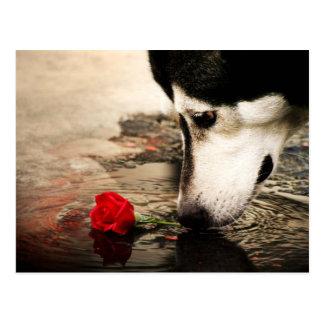 De hond en het Rood namen het Briefkaart van de Fo Wenskaart