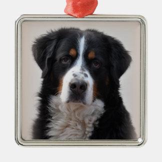 De hond mooie foto van de Berg van Bernese, gift Zilverkleurig Vierkant Ornament
