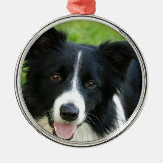 De Hond van border collie voegt het Huisdier van d Zilverkleurig Rond Ornament