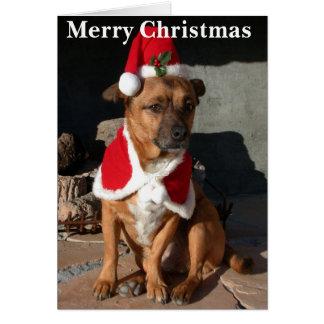De Hond van de kerstman Kaart