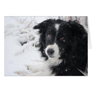 De Hond van de sneeuw Kaart