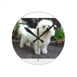 De Hond van Frisé van Bichon Ronde Klok