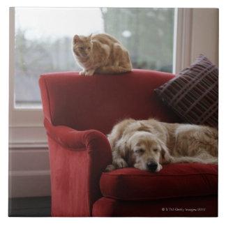 De hond van het golden retriever met de kat van de keramisch tegeltje