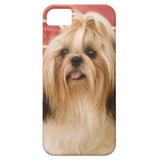 De hond van shih-Tzu Barely There iPhone 5 Hoesje