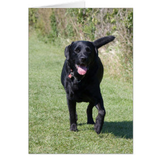 De hond zwart leeg wenskaart van de labrador