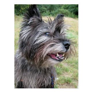 De hondbriefkaart van Terrier van de steenhoop Briefkaart