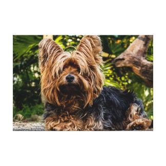 De hondcanvas van Yorkie Canvas Afdruk