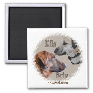 De Honden Brin van de Redding van Nowzad & de Magneet