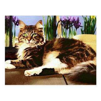 De hoofd Kat van de Wasbeer Briefkaart