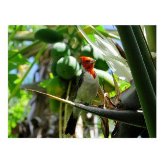 De hoofd Kokosnoten van de Paradijsvogel van Hawaï Briefkaart