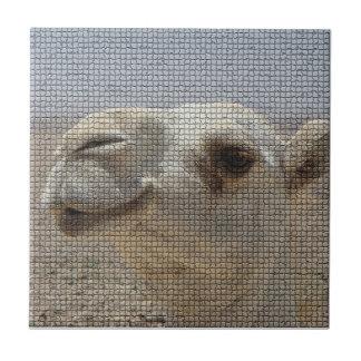 De HoofdTegel van de kameel Tegeltje