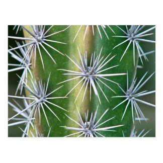 De Huntington Botanische Tuin, de Cactus van de Briefkaart
