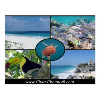 De Huren van de Vakantie van Tulum - het Briefkaart