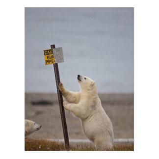 De ijsbeer leunt op teken voor begraven pijp briefkaart