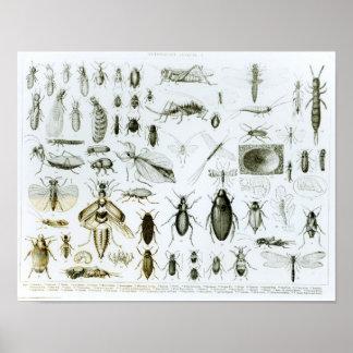 De Insecten van de entomologie Poster