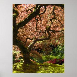 De Japanse Tuin van Acer Palmatum Portland van de Poster