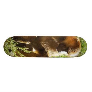 De jonge JeugdZitting van de Baviaan en neer het K Skateboard Deck