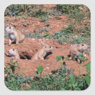 De Jongen van de prairiehond Vierkante Sticker