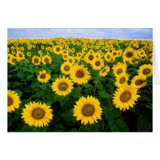 De Kaart van de Groeten van zonnebloemen