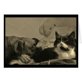 De Kaart van de Knuffel van de hond & van de Kat