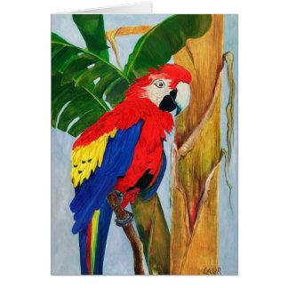 De Kaart van de nota - Tropische Papegaai