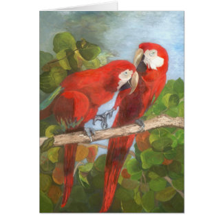 De Kaart van de nota - Tropische Vogels