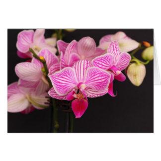 De kaart van de orchidee