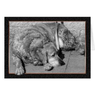 De Kaart van de Sympathie van de Hond van het