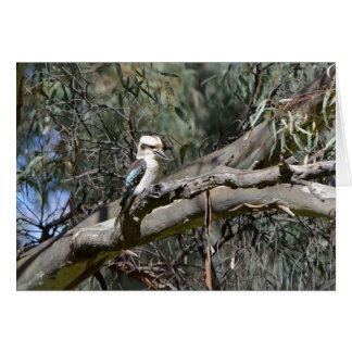 De Kaart van de Verjaardag van de kookaburra
