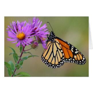 De Kaart van de vlinder