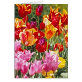 De kaart van tulpen