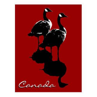 De Kaarten van de Ganzen van Canada van de Briefkaart