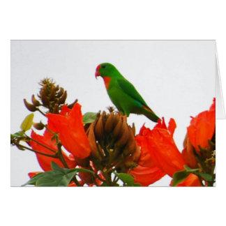 De kaarten van de nota met exotische papegaai op