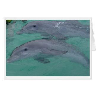 De Kaarten van de Nota van de dolfijn