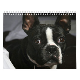 De Kalender 2009 van Boston Terrier