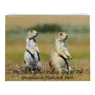 De kalender Met zwarte staart van de Prairiehond