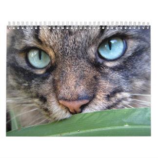 De Kalenders van de Kat van de Wasbeer van Maine Kalender