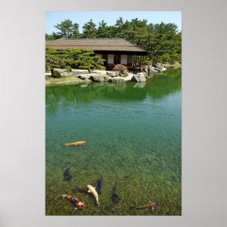De karpers van Koi in een Japanse tuin Poster
