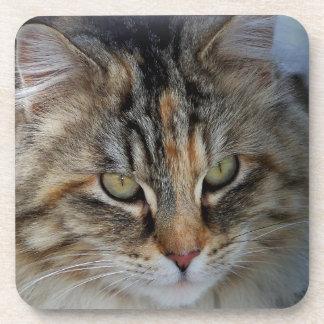 De kat Potrait van de Wasbeer van Maine Bier Onderzetters