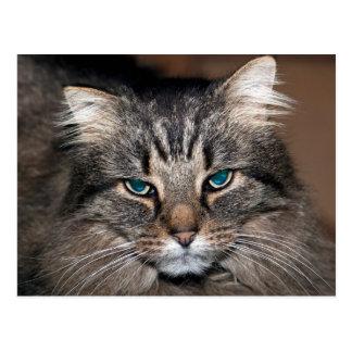 De Kat van de gestreepte kat Briefkaart