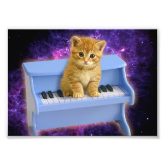 De kat van de piano foto afdrukken