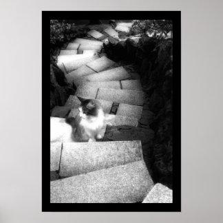 De kat van de Treden van Steping Poster