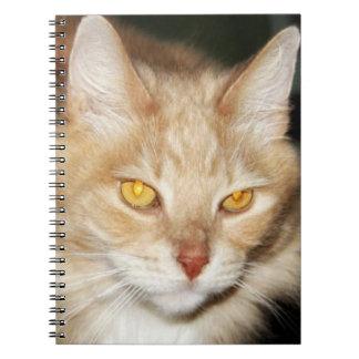 De Kat van de Wasbeer van Maine Ringband Notitieboek
