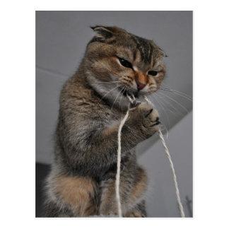 De kat van Flossing Briefkaart