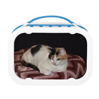 De Kat van het calico Lunchbox