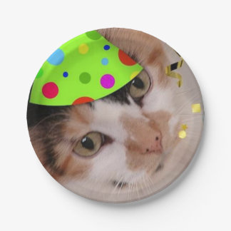 De Kat van het Calico van de Partij van de Papieren Bordje