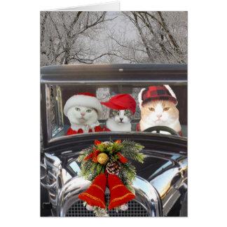 De Katten van Kerstmis in Auto Kaart